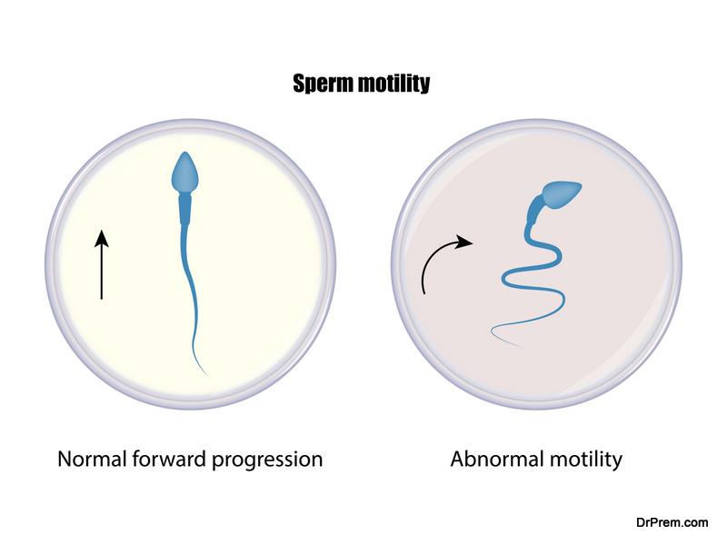 Sperm motility