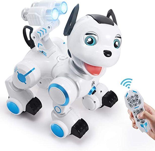RC Dog